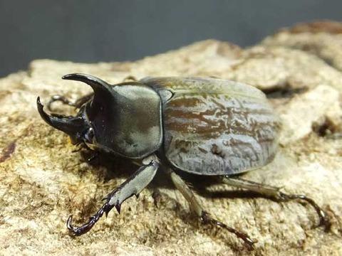 gurandhiskohuku33-4