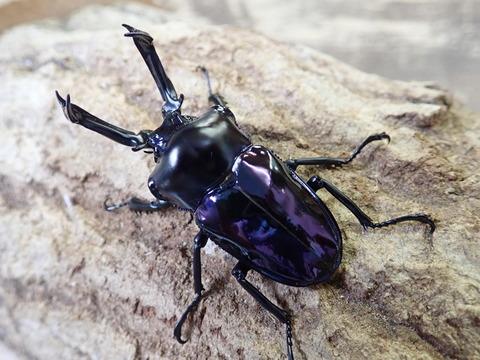 紫紺ブルー系54ミリ
