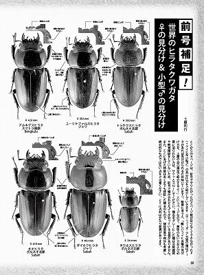 BE-KUWA-77-088