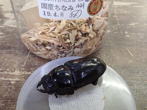 元祖奈良輪56♀
