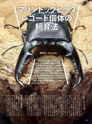 BE-KUWA-81-038-059