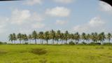 ガイアナの草原
