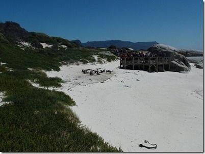 ペンギンビーチ