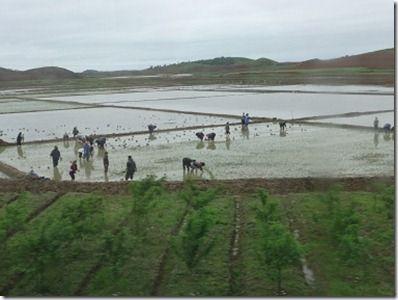 手作業で田植えする人々