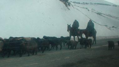 キルギスの遊牧民