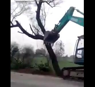 ショベルカーで道沿いに生えてる木を倒すが男性に直撃し死亡【動画】
