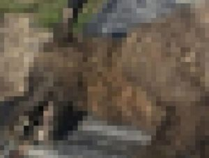 【恐怖】農家の男性が撃ち殺した生物、現存するどの生物とも一致しない…(画像あり)
