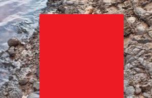 【超!閲覧注意】川でヤバいものが発見される(画像あり)