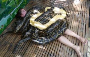 【衝撃】動物園「巨大ニシキヘビの餌やりです!」 ⇒ 子供たちが泣き叫ぶ出来事が起こる…