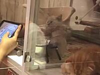 仙台市一番町のペットショップの子猫の扱い方が酷すぎるという動画が炎上中。