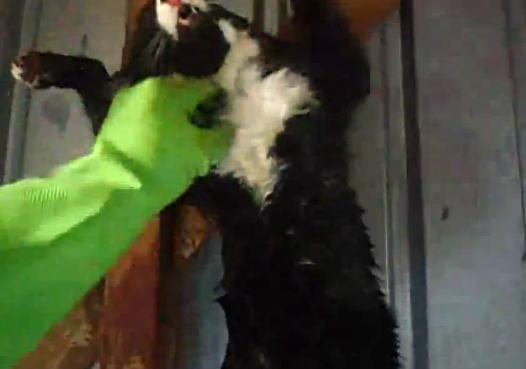 【閲覧注意】ネコの皮を剥ぐビデオ。