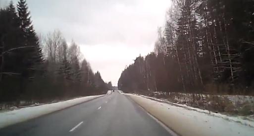 道路に飛び出してきたムースが車に衝突。その衝撃の車内映像【動画】
