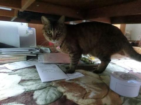 机の下に逃げたニャ