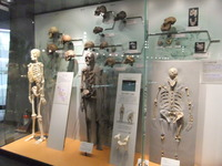福井県立恐竜博物館