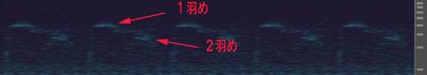 20170330Fukurou02