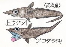 トウジンori