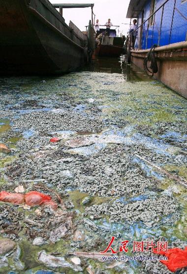 太湖の汚染6