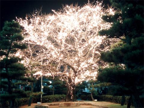 Landscape tree1024