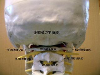 http://livedoor.blogimg.jp/gocky_z/imgs/f/7/f7c0cb6c.jpg