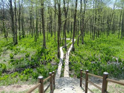 刺巻湿原1