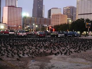 テキサスで見た鳥の大群