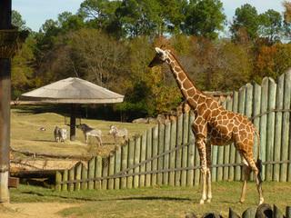 Caldwell Zooへ!