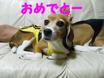 2010_0806マイピクチャ0046