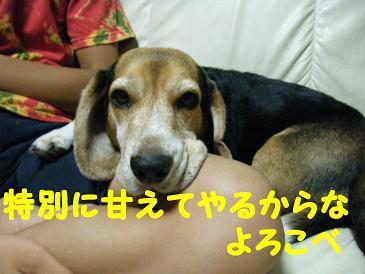 2010_0806マイピクチャ0048