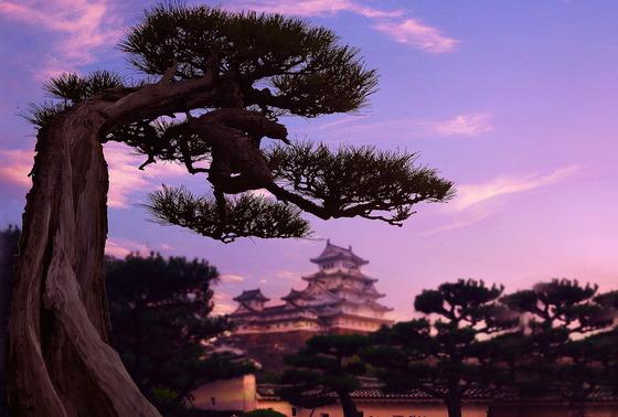 日本の伝統芸術「盆栽・彩時記」