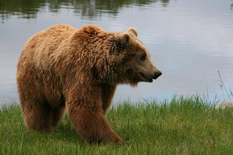 800px-Brown_bear_(Ursus_arctos_arctos)_smiling