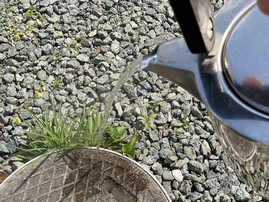 熱湯で除草 : 五時脱自ブログ