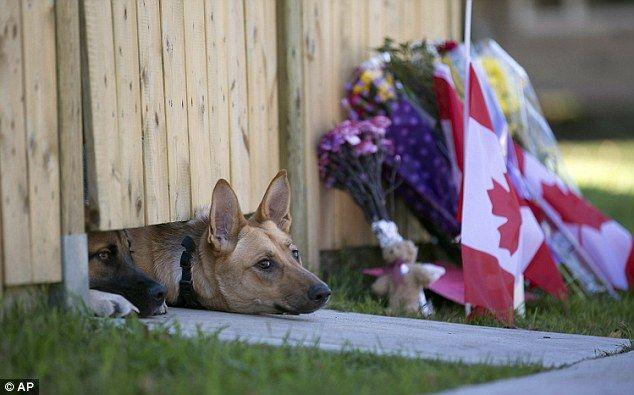 [カナダ]  警備中に殺されたご主人様を待ち続ける犬の写真