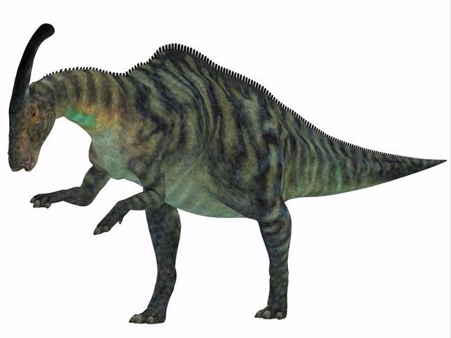parasaurolophus_l