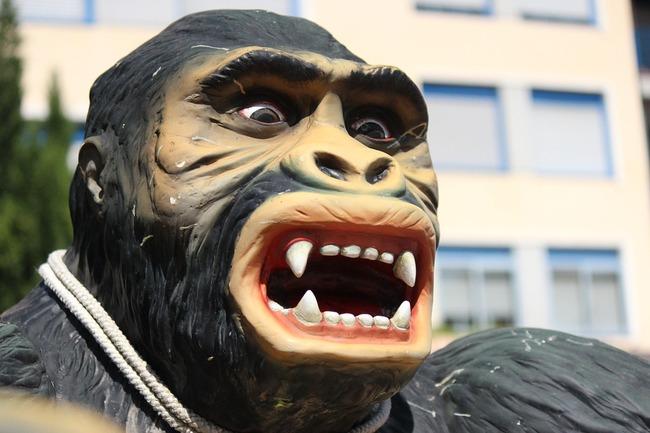 gorilla-1049539_960_720