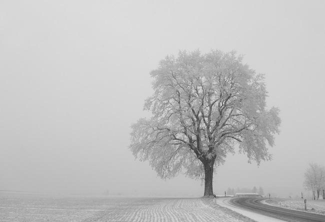 tree-550633_960_720