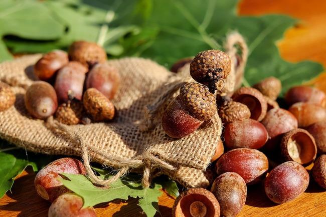 acorns-1710577_960_720