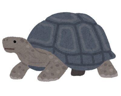 turtle_kame_zougame