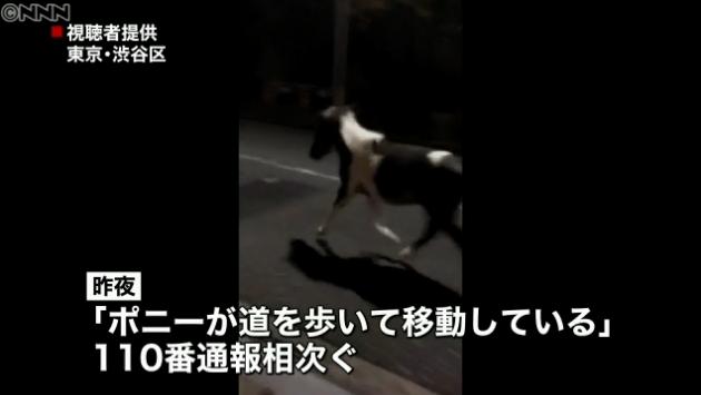 """渋谷を""""ポニー""""が駆け回る"""