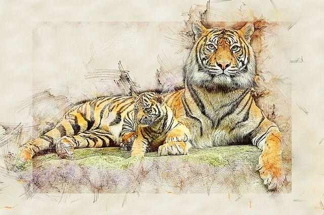 tiger-3726448_640