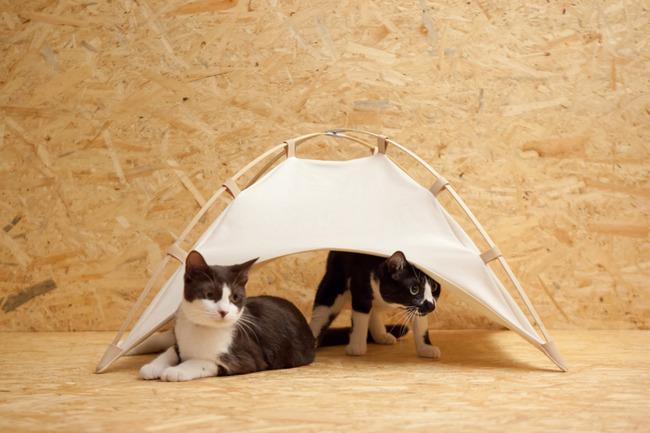 [画像]  猫用テントが話題