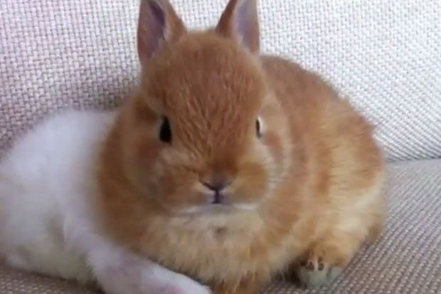 baby-bunny-parry-gripp