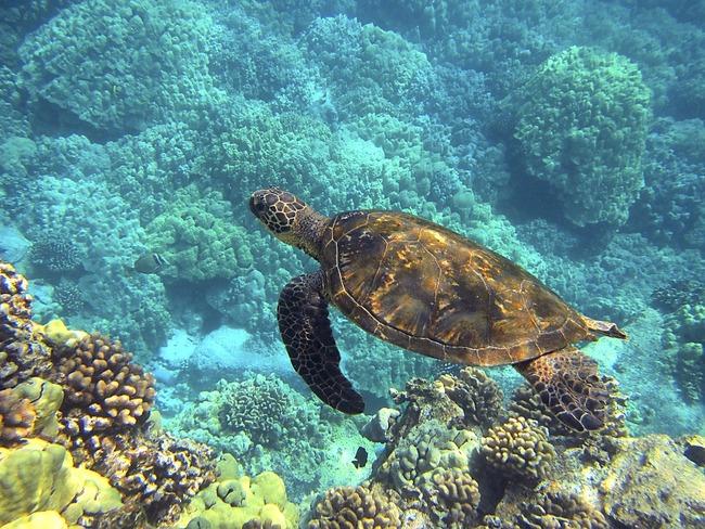 sea-turtle-547162_960_720