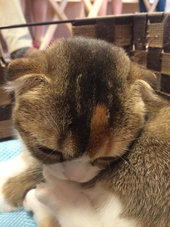 うさぎ島いったり猫カフェいったりと幸せだった