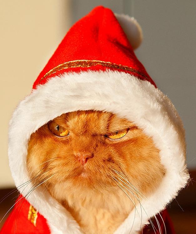a2014-10-6garfi-evil-grumpy-persian-cat-6__700