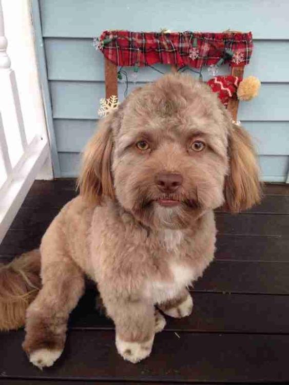 【画像】人間すぎる人面犬、見つかる