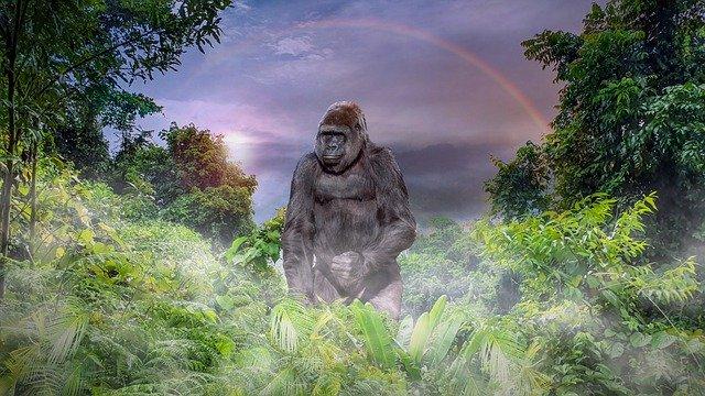ape-4920676_640