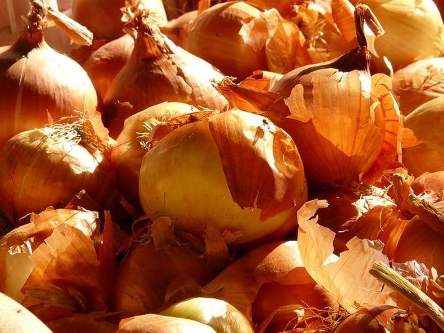 onion-73920_640
