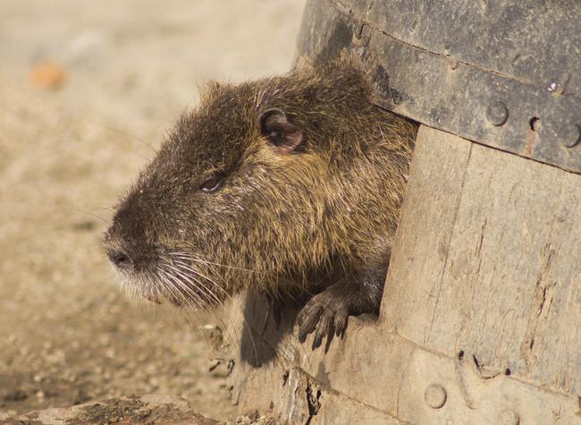 天王寺動物園で撮った写真を放出する