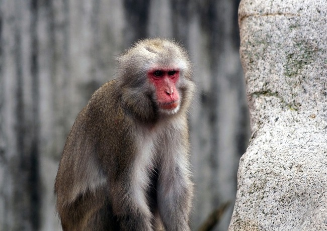monkey-1974738_960_720
