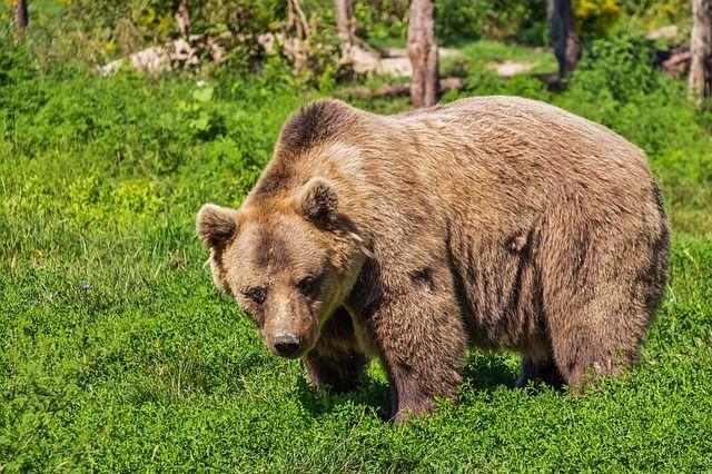 bear_1449225177